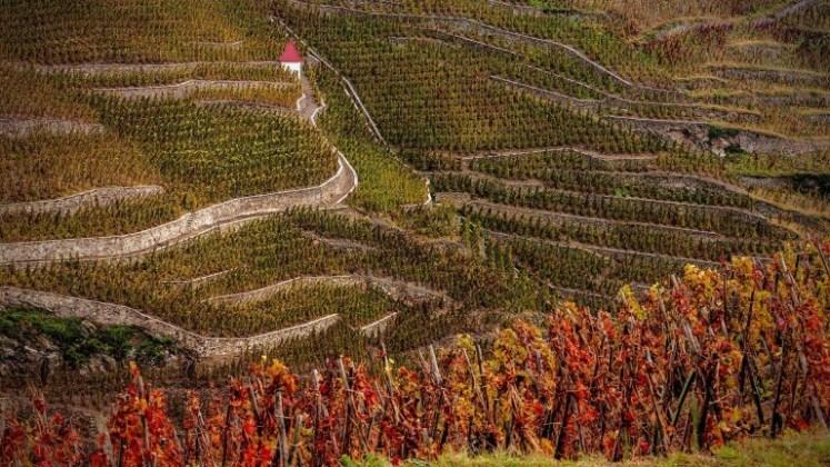 rhone-cote-rotie-vineyard-768x432